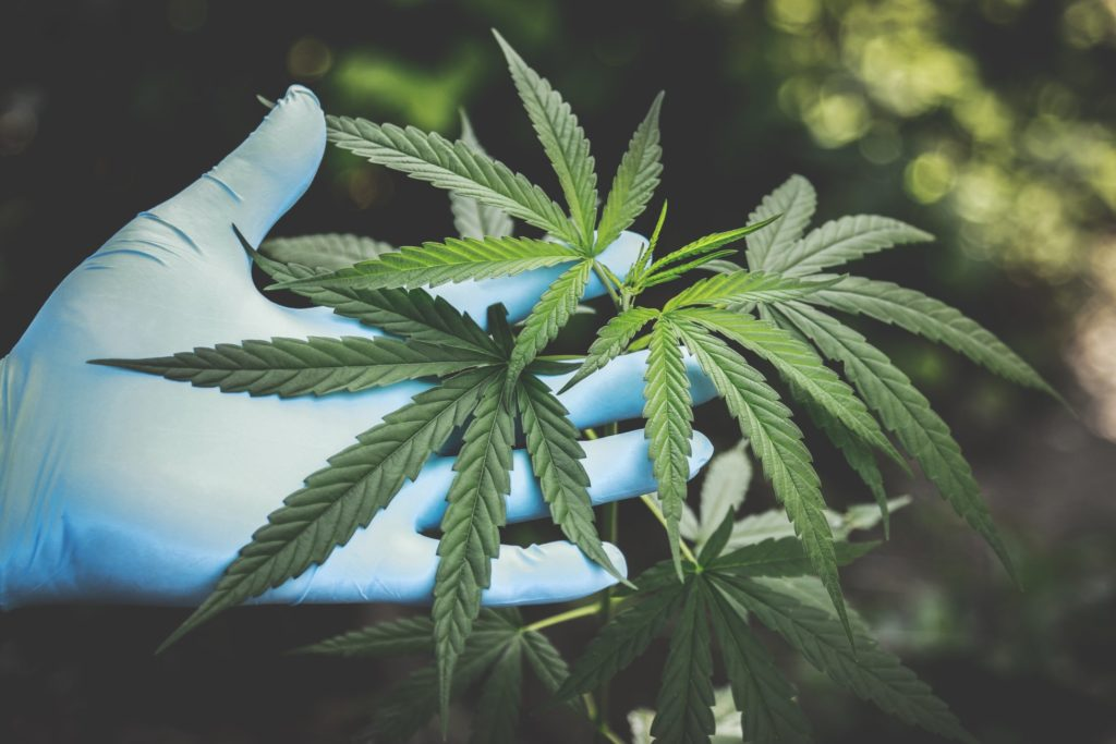 Cannabis has many positive effects and benefits
